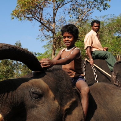 Mahut-elephant-10