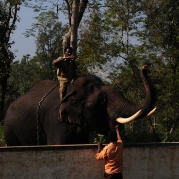 Mahut-elephant-12
