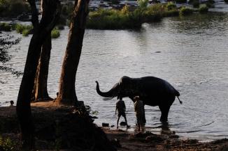 Mahut-elephant-21