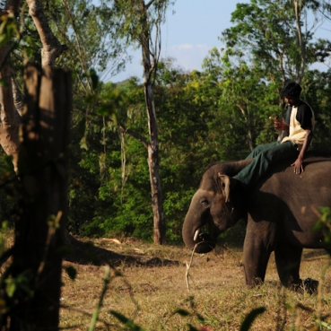 Mahut-elephant-31