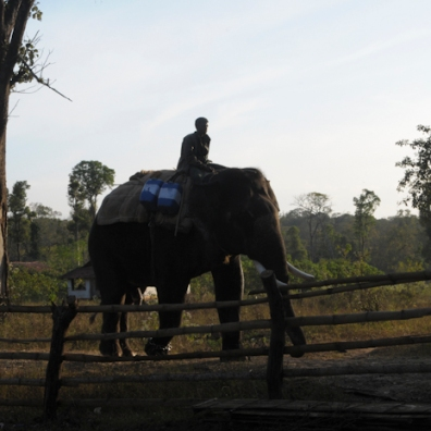 Mahut-elephant-34