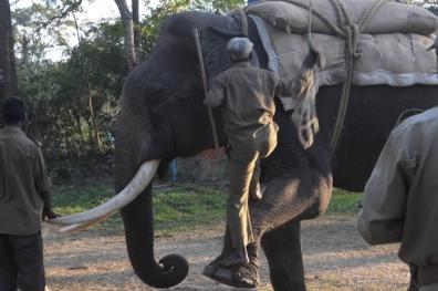 Mahut-elephant-35