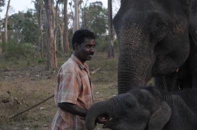Mahut-elephant-37