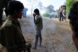 Mahut-elephant-4