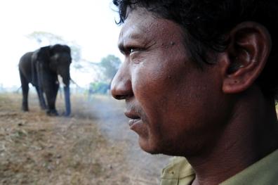 Mahut-elephant-6
