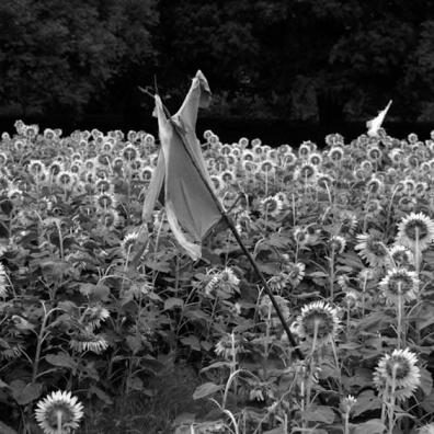 Scary Fields