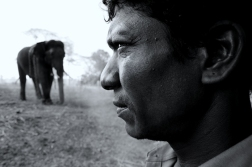 Mahut in Dubare elephant camp, Karnataka