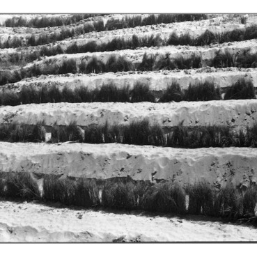 in Lines BW-13