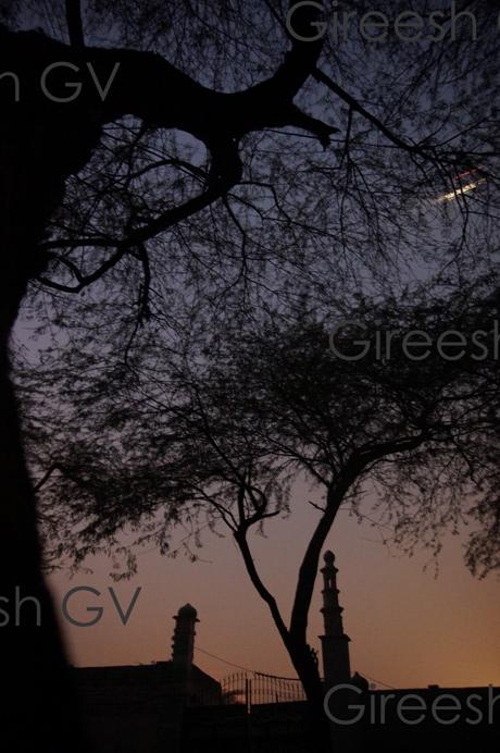 an evening flight on a winter evening