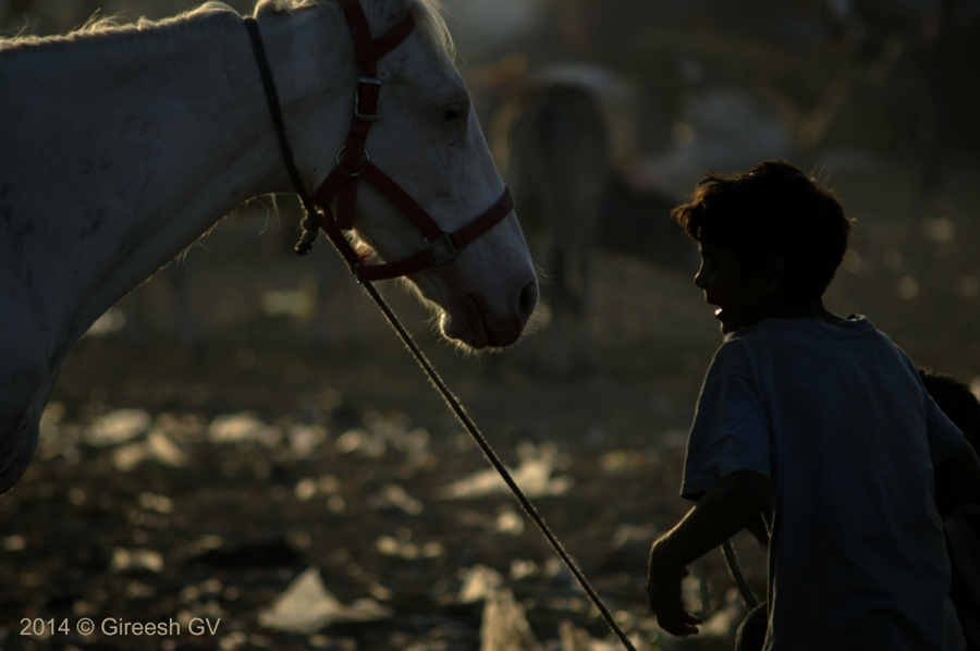 Boy with his horse at Pushkar cattle fair 2014.