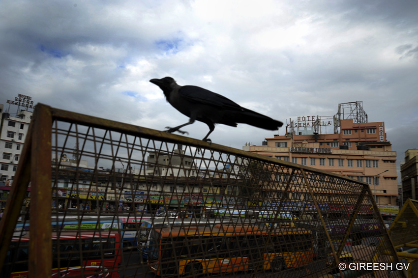 on a monsoon day in Bangalore Majestic bus stand.... crow about to take off